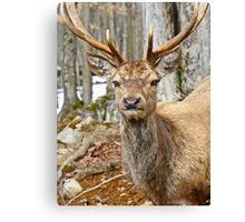 Check out my rack Canvas Print
