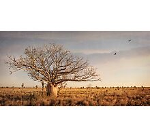 Beauty of the Boab Photographic Print