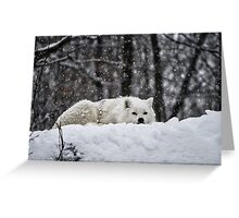 Dreams Of Warmer Weather Greeting Card