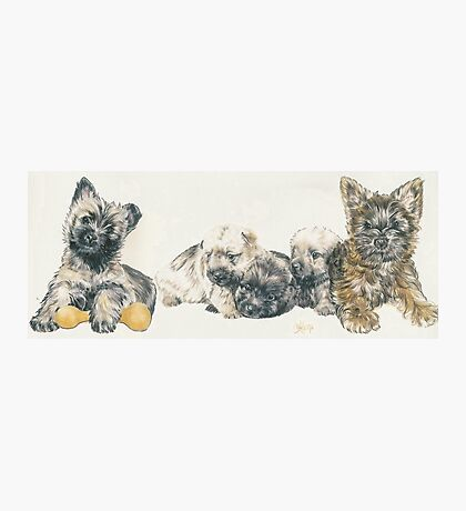 Cairn Terrier Puppies Photographic Print