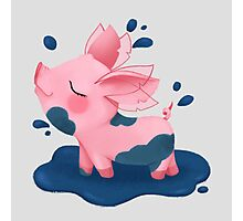 Molly the Micro Pig - Playing in a Puddle Photographic Print