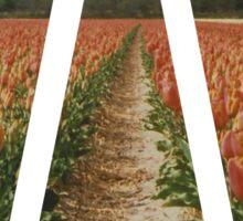 Dutch Tulips Fields Sticker