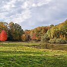 The Willow and The Little Red Tree by Kathilee