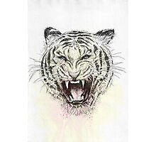 Wild Cat Photographic Print