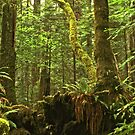 Old Growth by Barbara  Brown