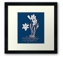 Daffodils on Midnight Blue Background Framed Print