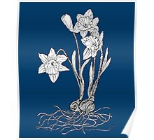Daffodils on Midnight Blue Background Poster