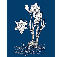 Daffodils on Midnight Blue Background Photographic Print