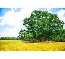 Hundred Acre Wood Photographic Print