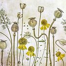 Poppies and Heleniums by Mandy Disher