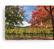 Fall vineyard Canvas Print