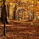 Autumn In Eden by Laurie Minor
