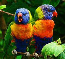 Are You Listening - Rainbow Lorikeets by Margaret Saheed