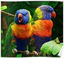Are You Listening - Rainbow Lorikeets Poster