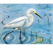 Snowy Egret's Calm Strides Photographic Print