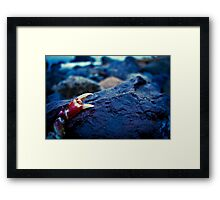 Red Claw Framed Print