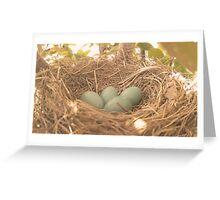 Robin's Eggs Greeting Card