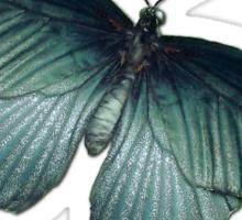 Real Butterfly No. 5 - Metallic Blue-Green Sticker