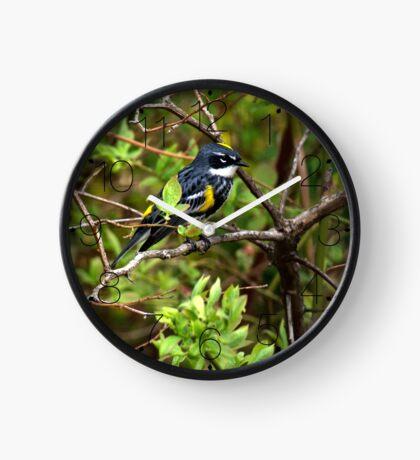 Yellow-Rumped Warbler  Clock