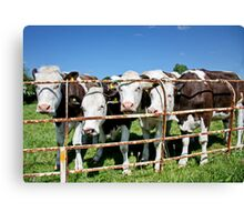 Friendly Cows Canvas Print