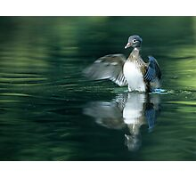 Duck Landing Photographic Print