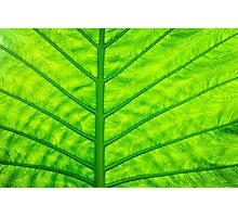 Close up green leaf texture Photographic Print