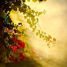 Bouganvillea and Light by Barbara  Brown