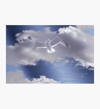 Seagull with Matthew 6:26-27 in White Letters Photographic Print