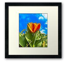 Sunny Tulip Framed Print