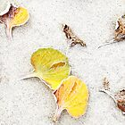 Spots of Color... by Angelika  Vogel