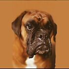 Quino the boxer. by Robert Elfferich