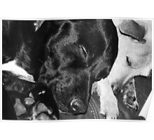 Dogs sleeping Poster