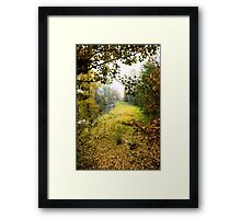 Colorful foliage in the autumn park Framed Print