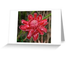 White-Tipped Red Torch Ginger Bloom Greeting Card