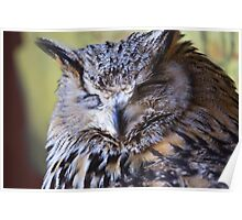 Portrait of The Eurasian Eagle Owl (Bubo bubo) Poster