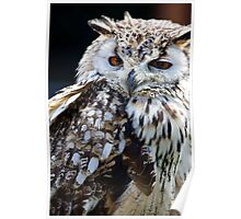 Portrait of The Eurasian Eagle Owl (Bubo bubo). Poster
