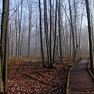 Hint Of Fog In Fall by Debbie Oppermann