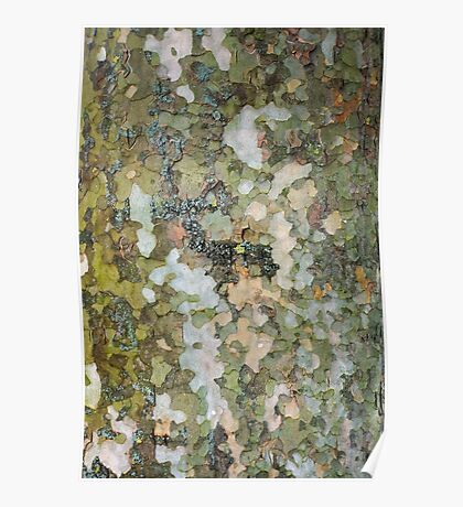 natural green forest tree bark texture camouflage adventure pattern Poster