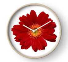 Red gerbera Isolated Clock