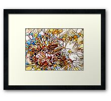 The Colors Of a Flower Framed Print