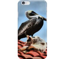 cat and pelican - gato y pelicano iPhone Case/Skin