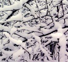 Winter branch Sticker