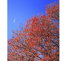 Fall Contrast Photographic Print