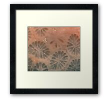 Agatized Coral Filtered Framed Print