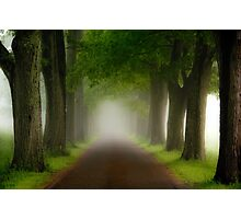 Spring Fog Photographic Print