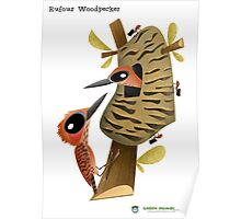 Rufous Woodpecker caricature Poster