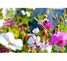 ollieworld Photographic Print