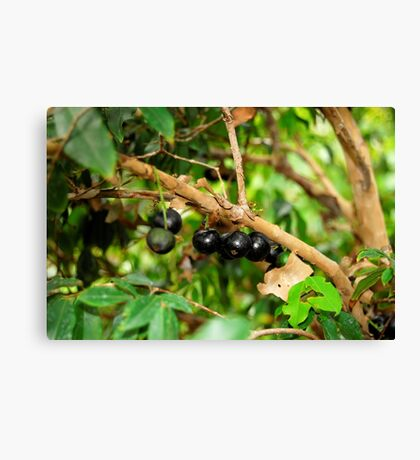 Jabotica Fruit Tree Canvas Print