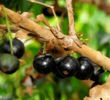 Jabotica Fruit Tree Sticker