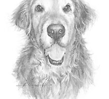 Golden retriever with wavy hair drawing by Mike Theuer